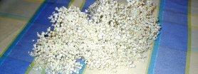 Kwiatki smażone i zdrowe  (czarny bez)