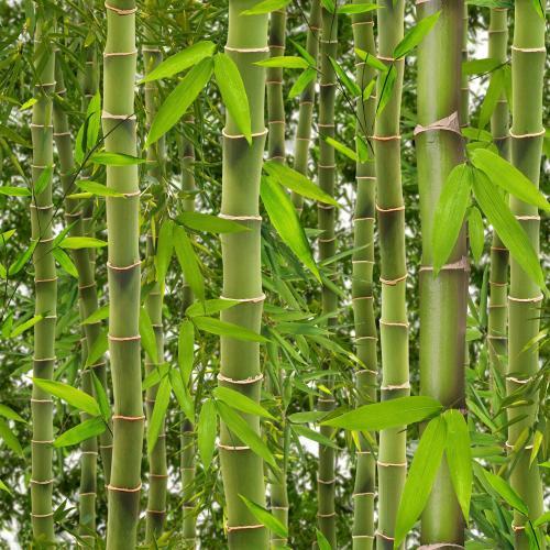 Biochemia Urody, Puder bambusowy 100%