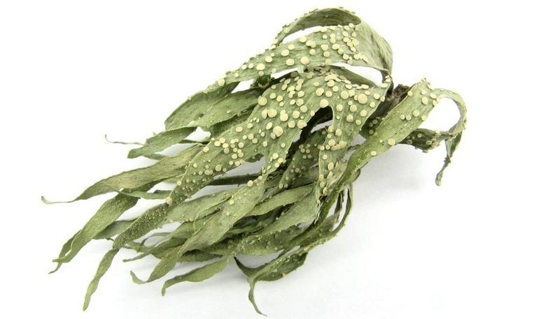 algi morskie na cellulit