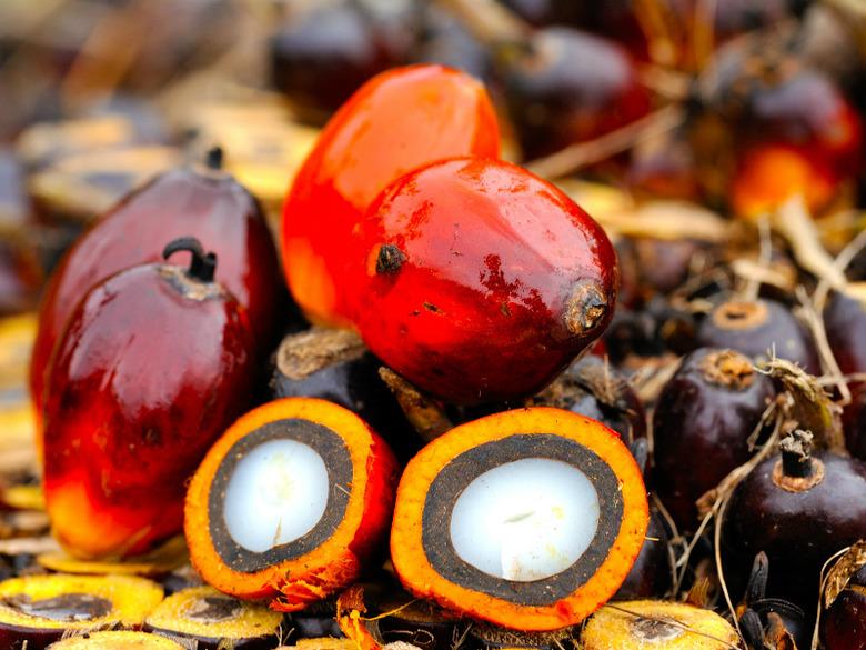 Czy Unikać Kosmetyków Z Olejem Palmowym Wizazpl