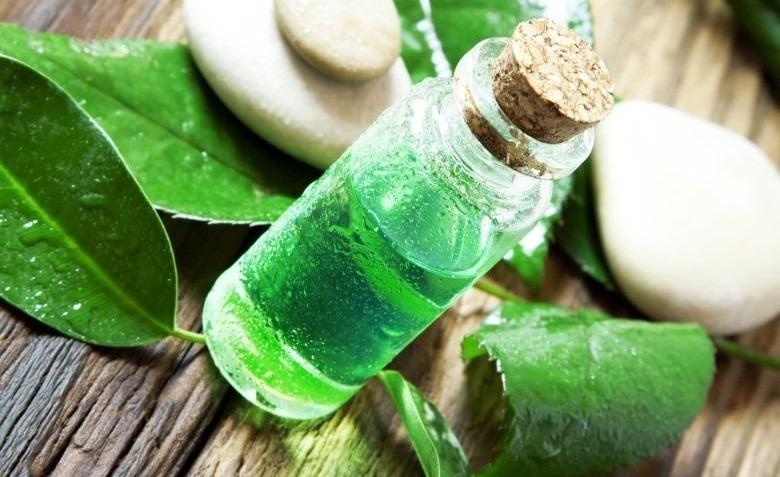 olejek herbaciany
